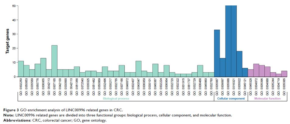 Figure 3 GO enrichment analysis of LINC00996 related genes in CRC.